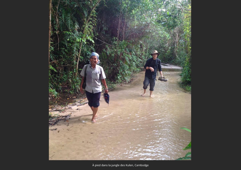 jungle-cambodge