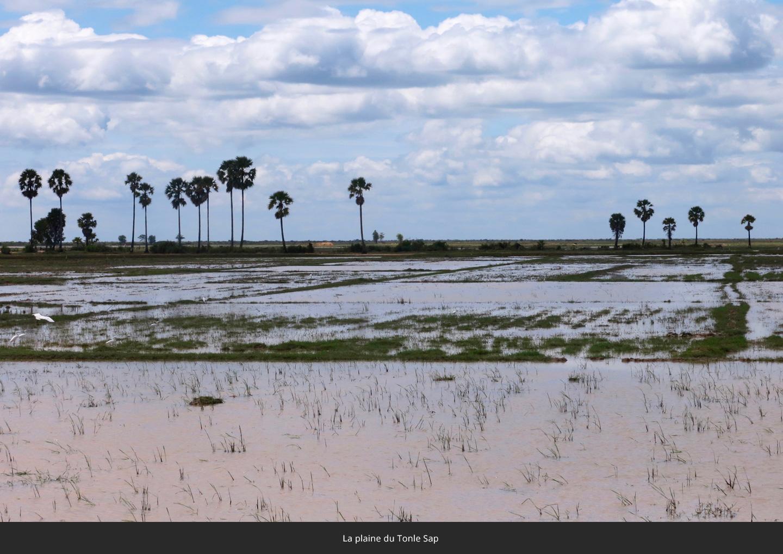 la-plaine-du-Tonle-Sap